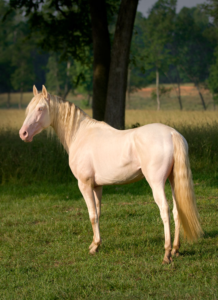 grulla lesbian personals Favorite this post mar 8 high brow hickory grulla mare map hide this posting restore restore this posting favorite this post mar 8 rehoming sweet shar pei male.